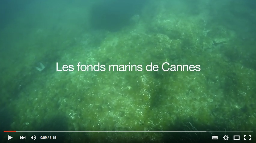 Fonds marins cannois